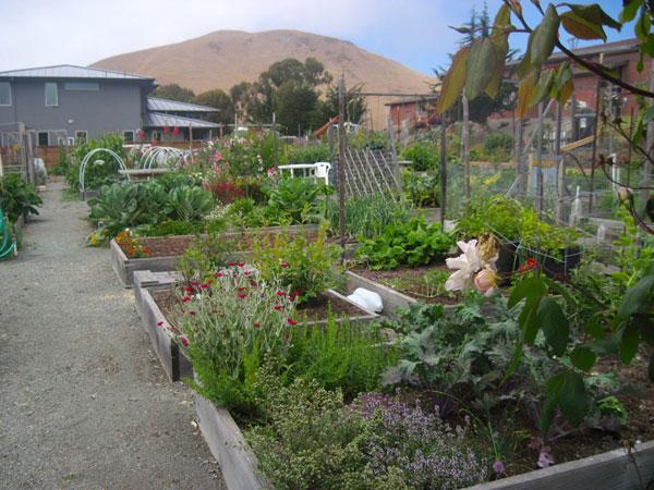 1 Estero Community Garden Southern California Eat Slo